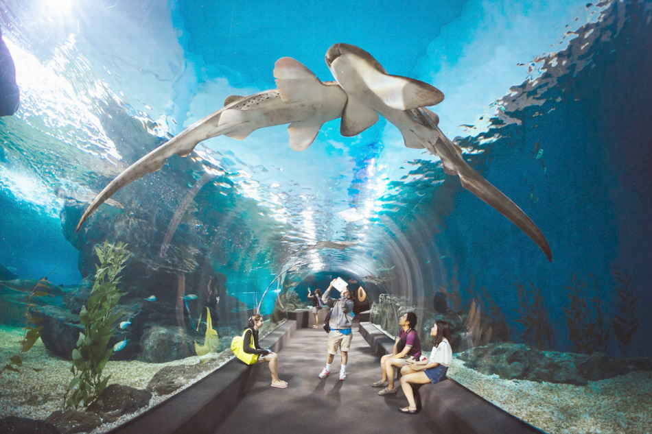 siam-ocean-world-madame-tussauds-10