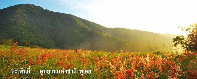 แนะนำ 5 ที่เที่ยวหน้าฝน ใกล้กรุงเทพ – อุทยานแห่งชาติป่าพุเตย สุพรรณบุรี