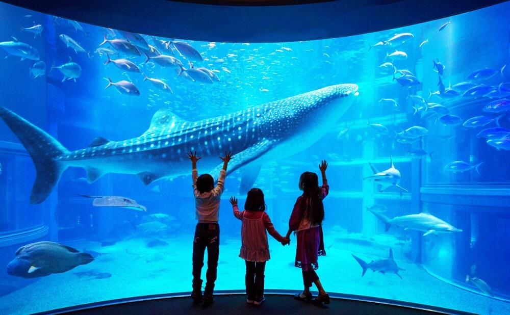 พิพิธภัณฑ์สัตว์น้ำไคยูคัง (Osaka Aquarium Kaiyukan)