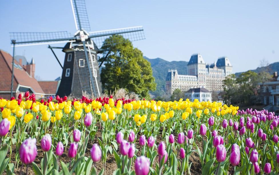 181130_tulip_05