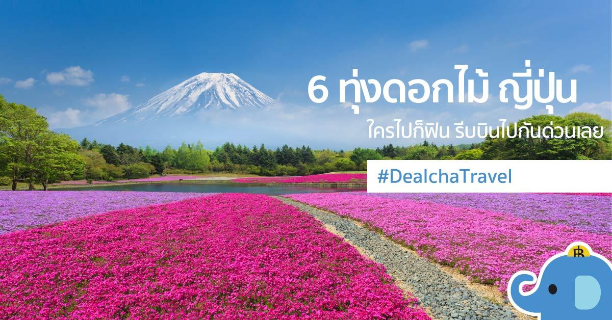 ทุกดอกไม้ญี่ปุ่น เทศกาลดอกไม้ ญี่ปุ่น