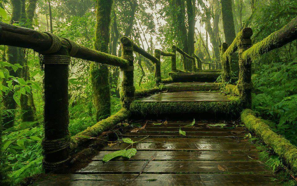 เส้นทางศึกษาธรรมชาติอ่างกา รูปจาก MThai