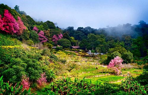 อุทยานแห่งชาติดอยสุเทพ ดอยปุย อ.เมือง จ.เชียงใหม่ #3 รูปจาก ท่องทั่วไทย